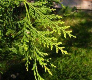 Heckenpflanzentotal